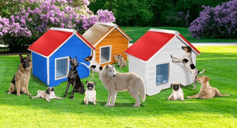 kucica za psa pse veliki pas velikog psa deobermana dogu vucjak vucjaka irski seter mastif skotski ovcar
